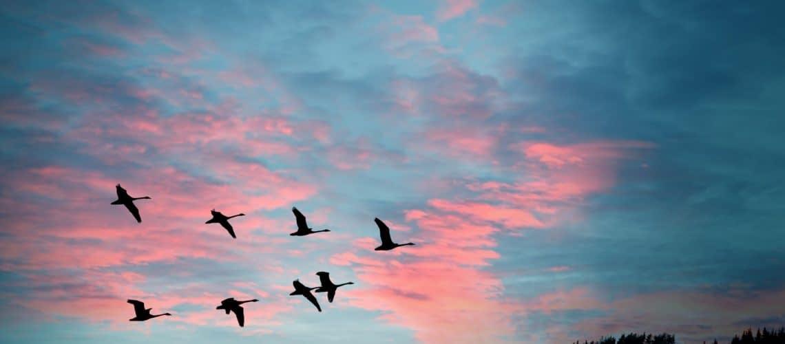 BIRDS QUANTUM SENSE